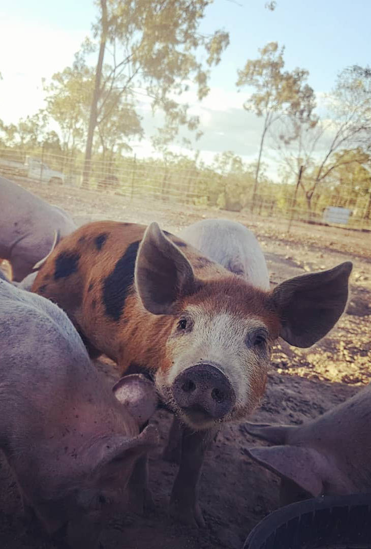 Houtkapper Personal raving of the month - Ethical Meats